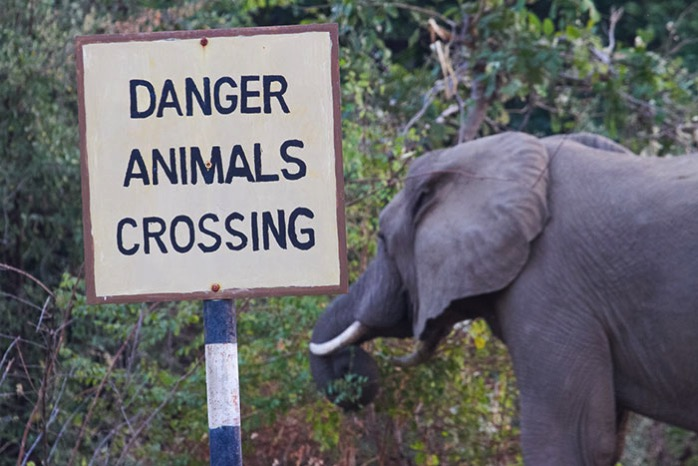 Animals-crossing.jpg