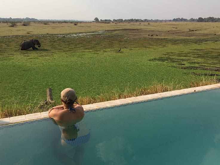 Elephant Kafunta Pool