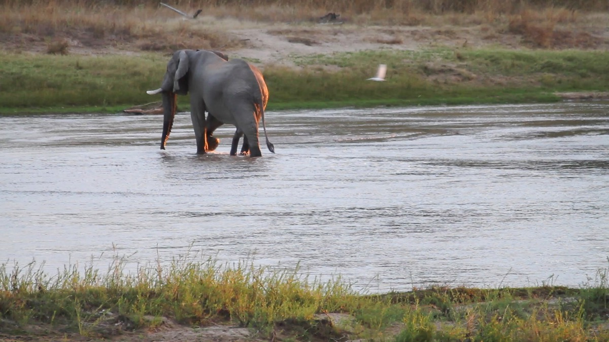 Zambie Parc National North Luangwa Elephant Crossing